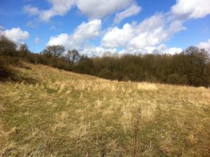 Oakenshaw woodlands