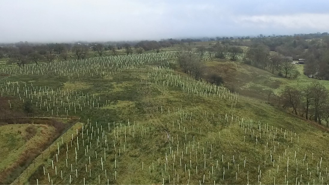 Beckfoot habitat schemes on Bond Beck