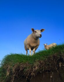 Who ewes looking at.