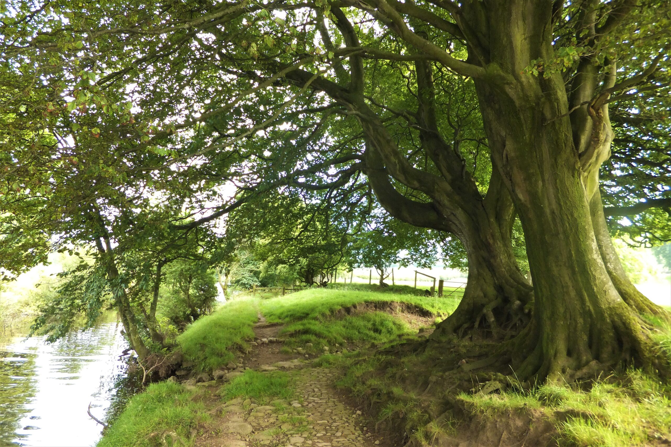 Ancient cobbled pathway at Newton