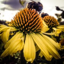 Pollination for the nation
