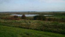 Hesketh Outmarsh, Ribble Estuary