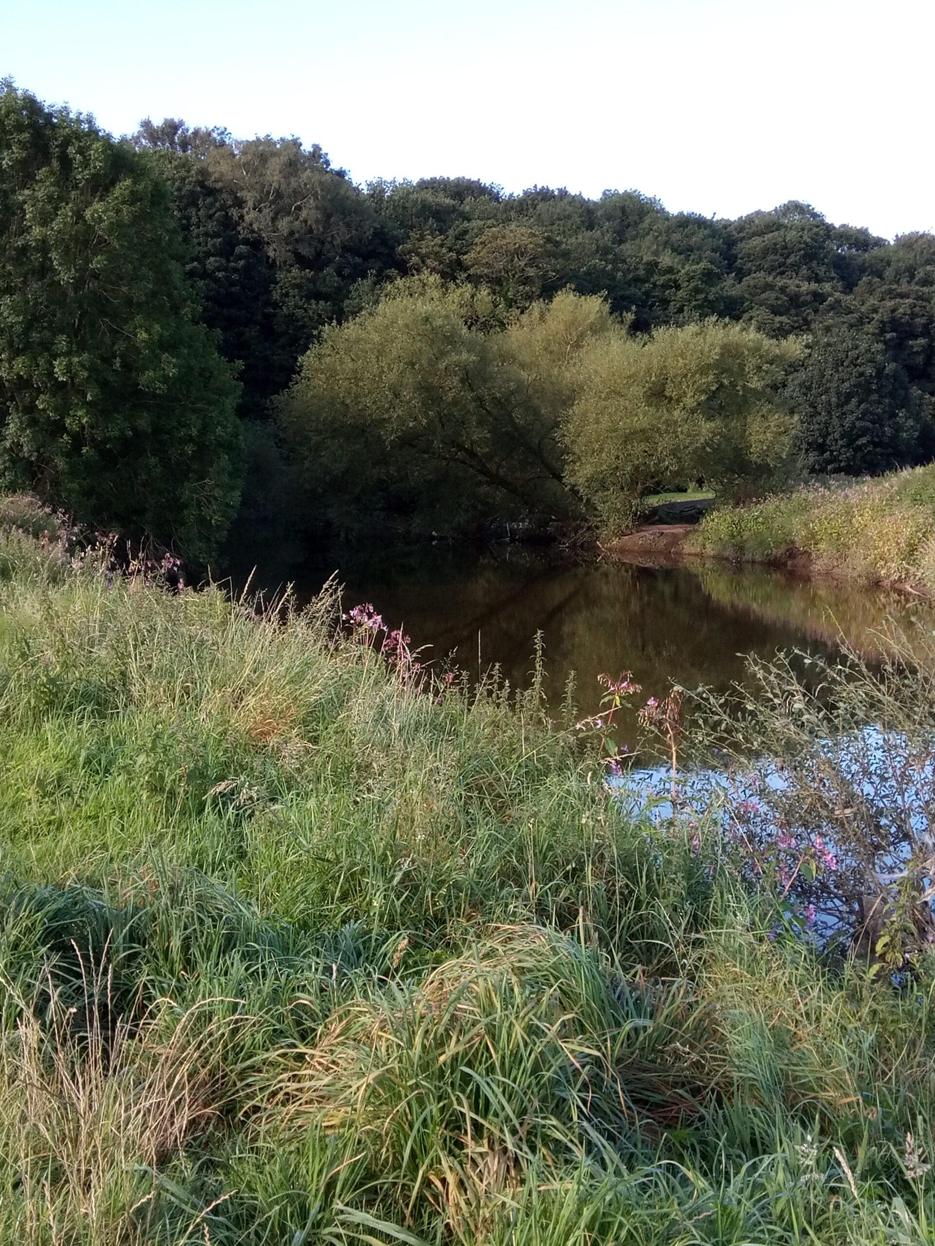 River Darwen at Holland House Woods