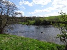 River Ribble near West Bradford