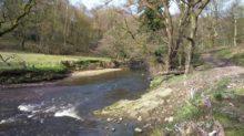 River Darwen at Hoghton Bottoms